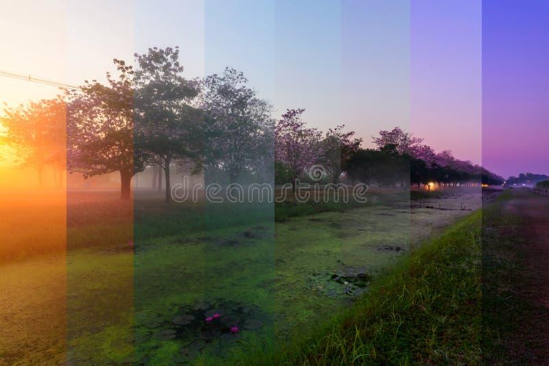 Couleur différente d'ombre de rangée rose d'arbre de trompette avec la brume dans le temps de lever de soleil photographie stock
