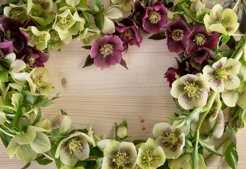 Couleur en pastel de composition florale créative sur le fond en bois naturel Vue supérieure, l'espace des textes image libre de droits