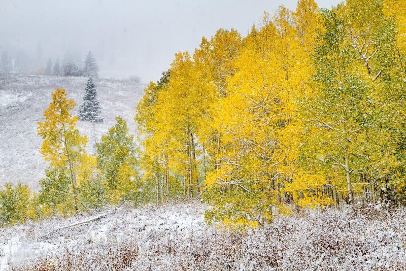 Couleur et neige de chute dans le Colorado images libres de droits