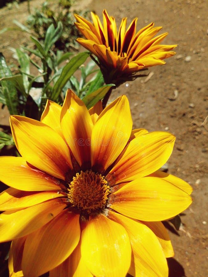Couleur jaune en nature photos libres de droits