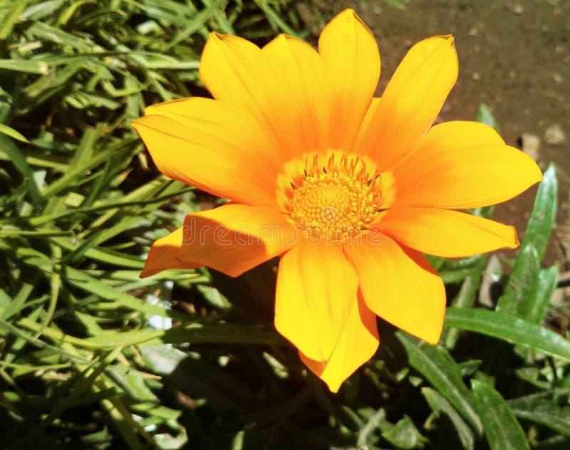 Couleur jaune en nature images libres de droits