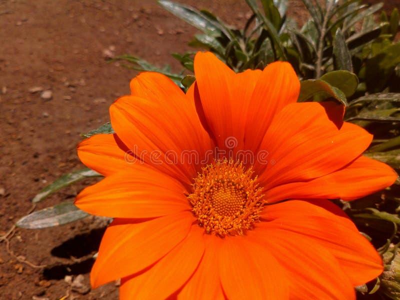 Couleur orange en nature photos libres de droits