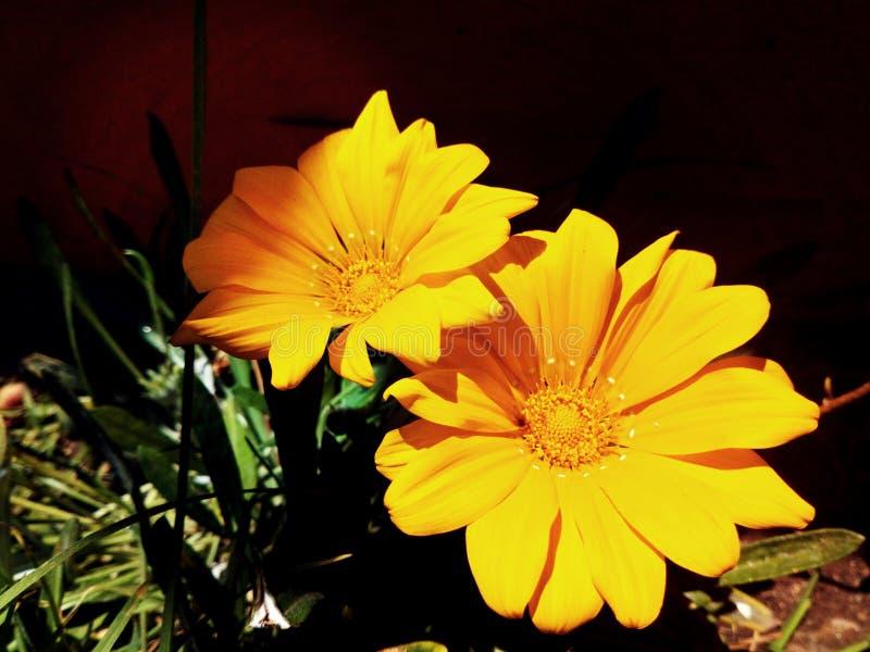 Couleur orange en nature image libre de droits