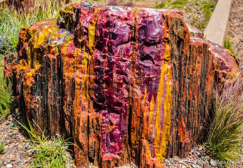 Couleur pétrifiée {Forest Natl Park pétrifié] photos libres de droits
