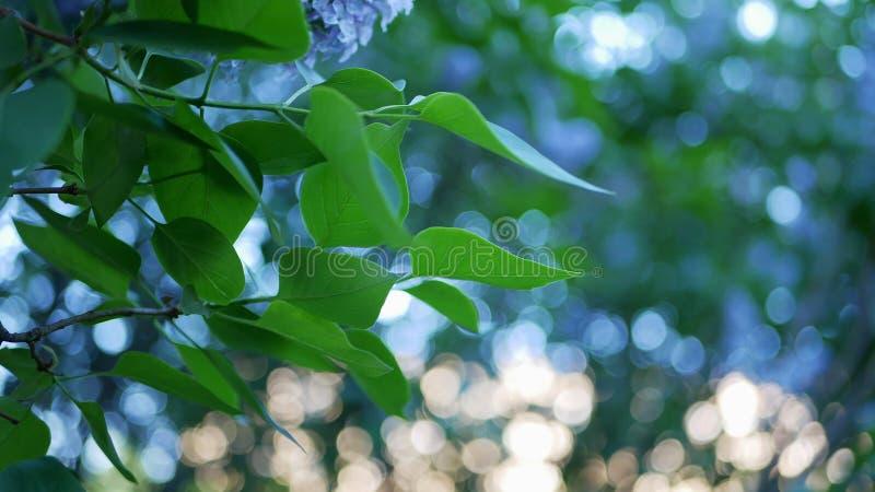 Couleurs bleues, vertes, d'or et autres de se composer multicolore de fond images stock