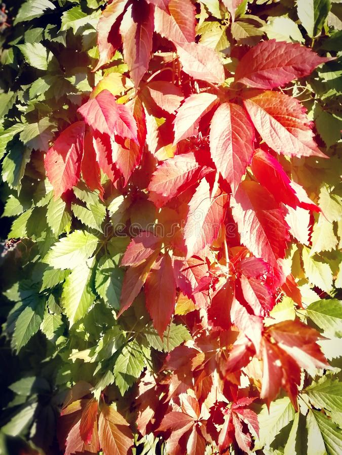 Couleurs d'automne photo stock