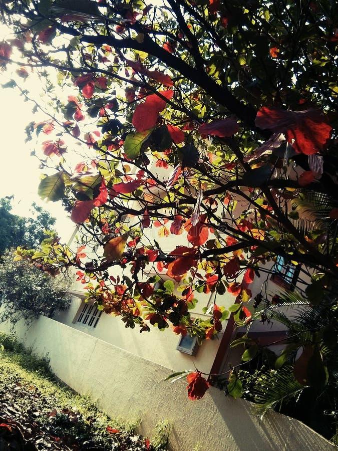 Download Couleurs d'automne photo stock. Image du ressort, automne - 45350732