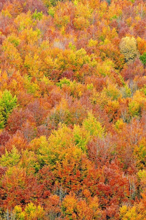 Couleurs d'automne dans la saison d'automne photo stock