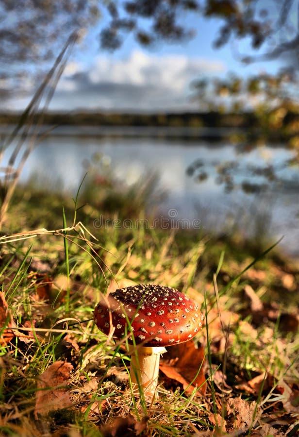 Couleurs d'automne dans une forêt avec le champignon photos libres de droits