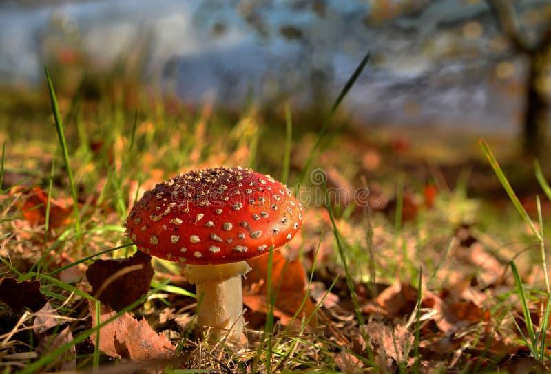 Couleurs d'automne dans une forêt avec le champignon image libre de droits