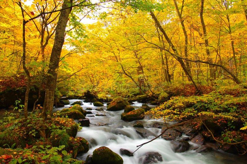 Couleurs d'automne de fleuve d'Oirase images libres de droits