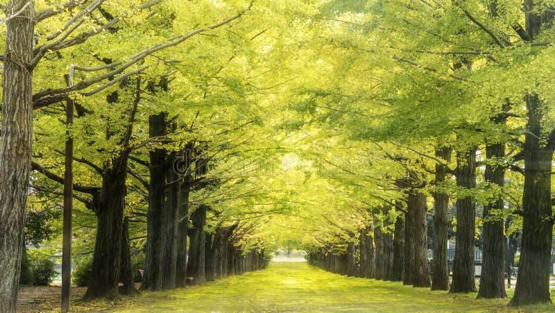 Couleurs d'automne de gorge de Naruko au Japon et à l'arrière-plan gentil de bleu et de nuage photos libres de droits