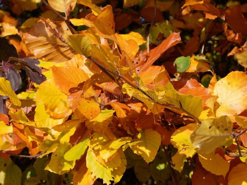 Couleurs d'automne en Suisse image stock