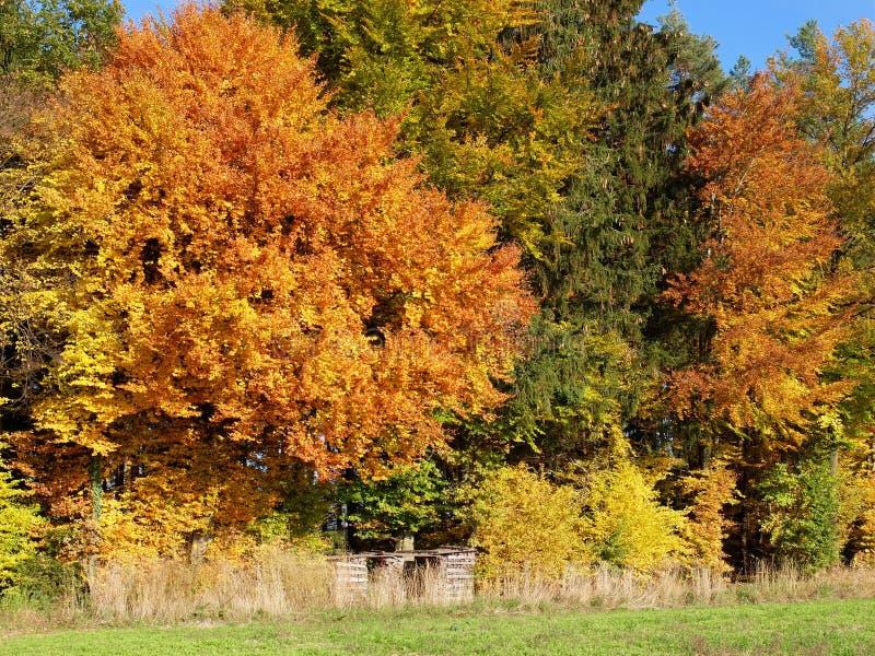 Couleurs d'automne en Suisse photographie stock libre de droits