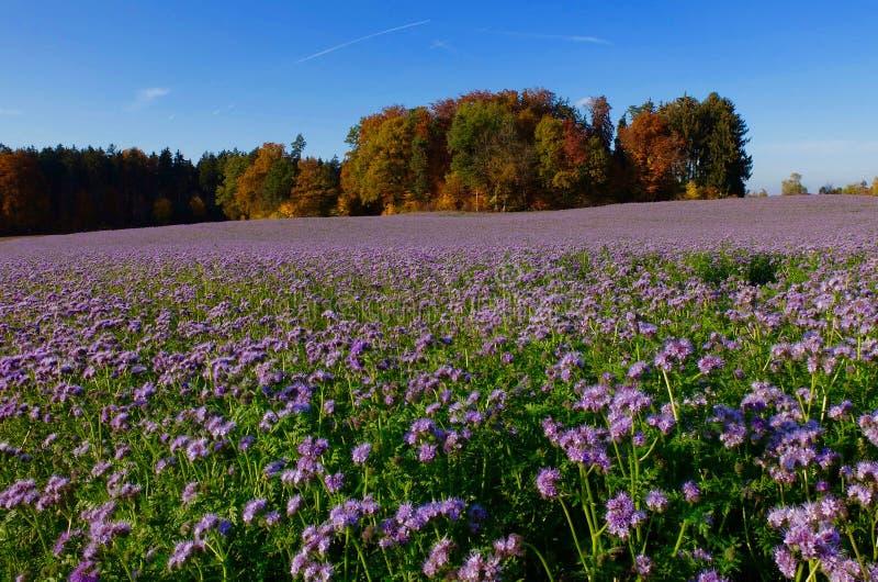 Couleurs d'automne en Suisse photo stock