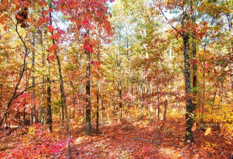 Couleurs d'automne ou de chute dans la forêt photographie stock libre de droits
