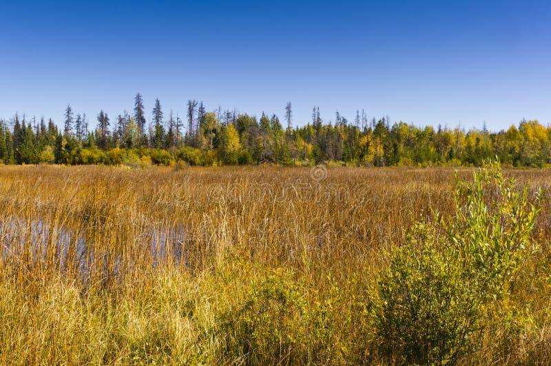 Couleurs d'automne par un marais photos stock
