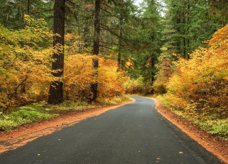 Couleurs d'automne sur Lolo Pass photographie stock