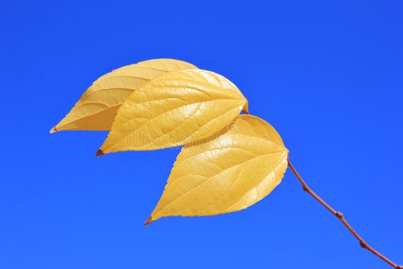 Couleurs d'or en nature - Autumn Leaves photo libre de droits