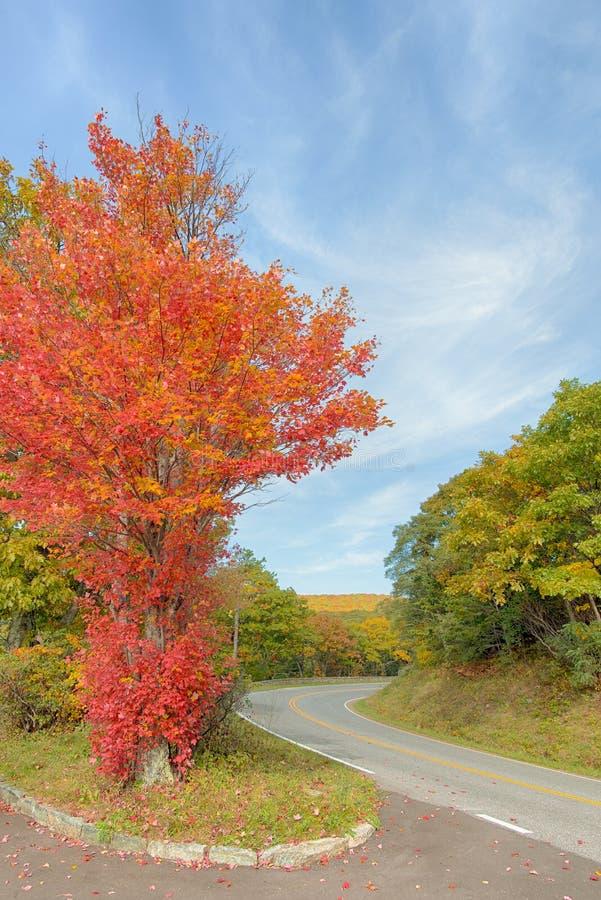 Couleurs de chute, commande d'horizon, parc national de Shenandoah, VA photographie stock libre de droits