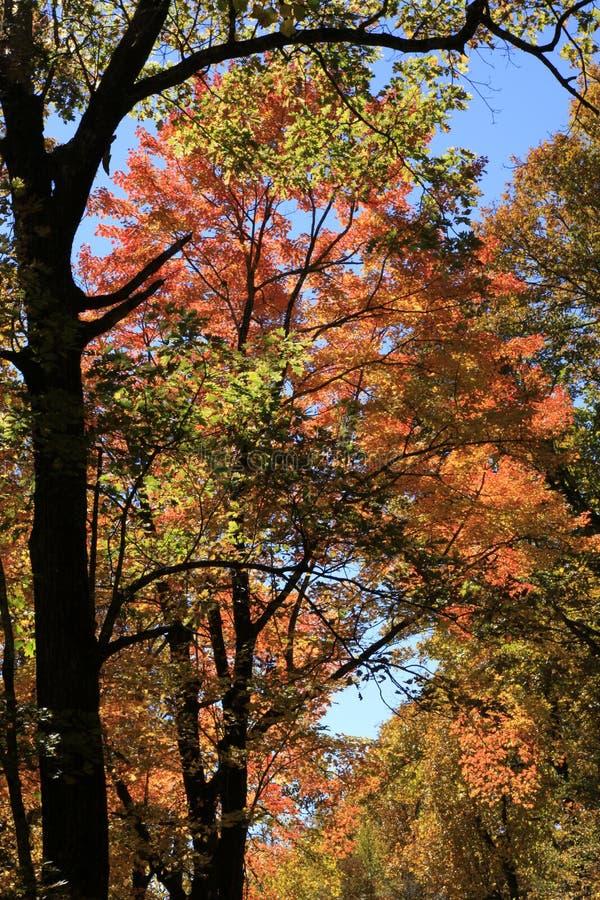 Couleurs de chute le long de Ridge Parkway bleu photographie stock libre de droits