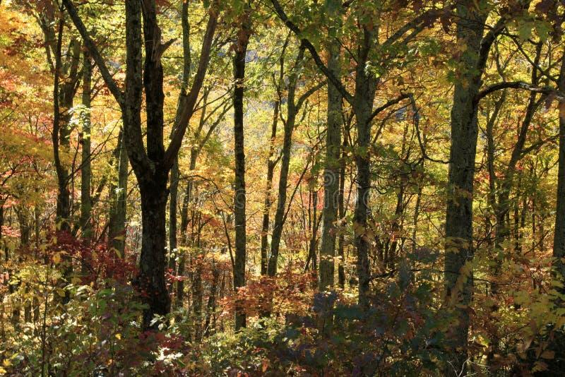 Couleurs de chute le long de Ridge Parkway bleu images libres de droits