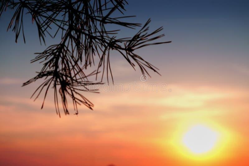 Couleurs de ciel de coucher du soleil et silhouette de branches de pin images stock