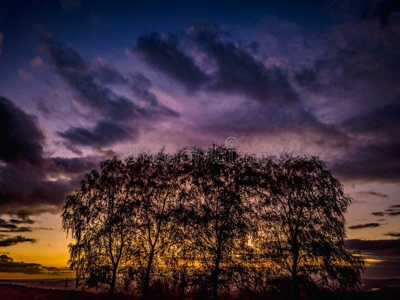 Couleurs de coucher du soleil de l'Allemagne de nature de bourdon photos stock