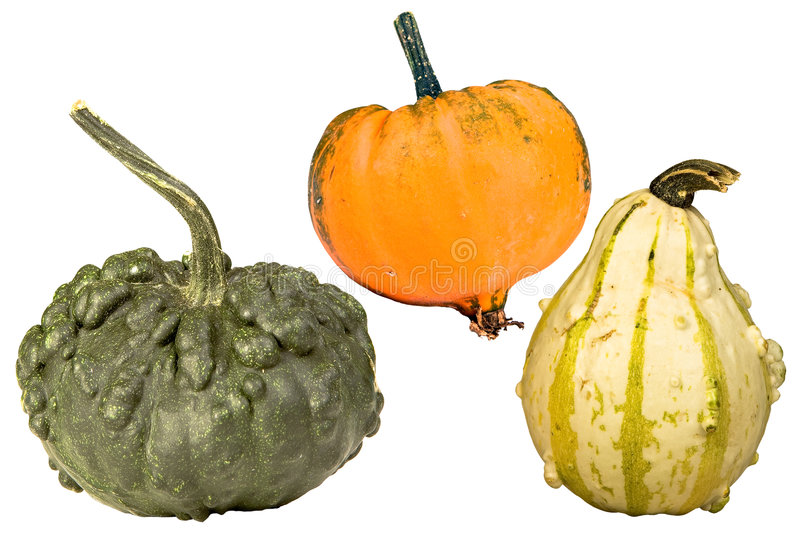 Couleurs de courge images stock