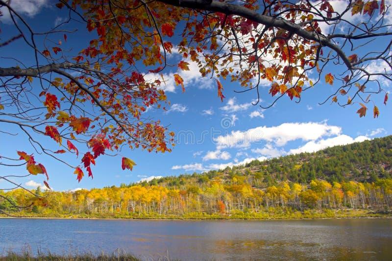 Couleurs de feuillage d'automne photo libre de droits