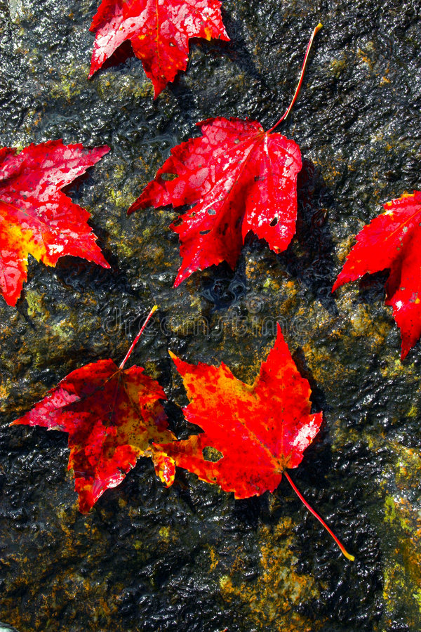 Couleurs de feuillage d'automne photo stock