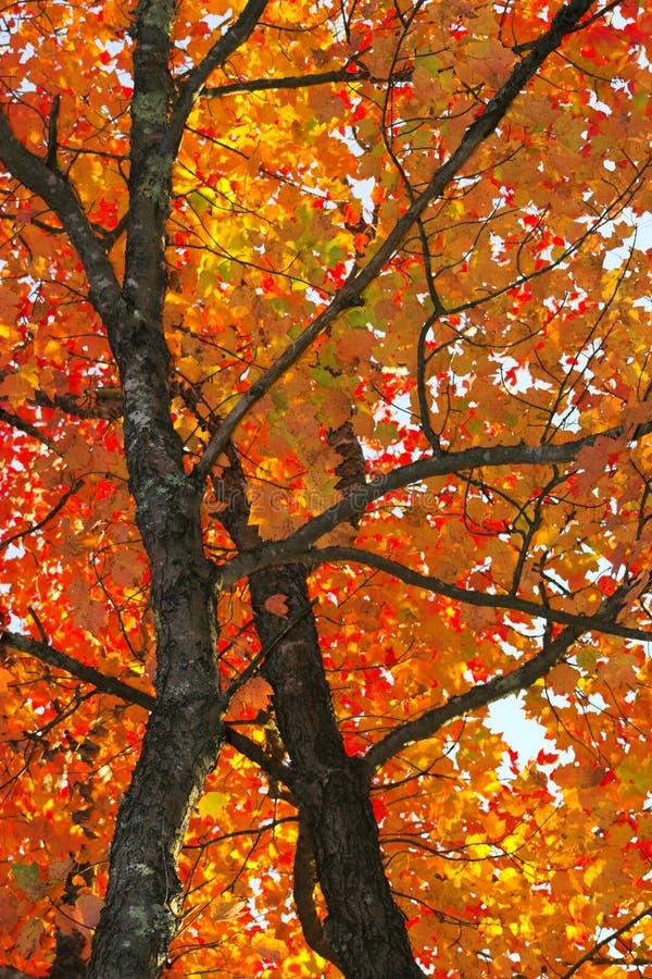 Couleurs de feuillage d'automne photographie stock libre de droits