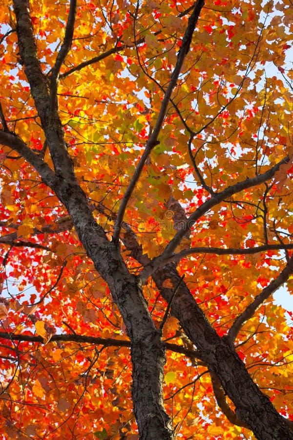 Couleurs de feuillage d'automne photographie stock