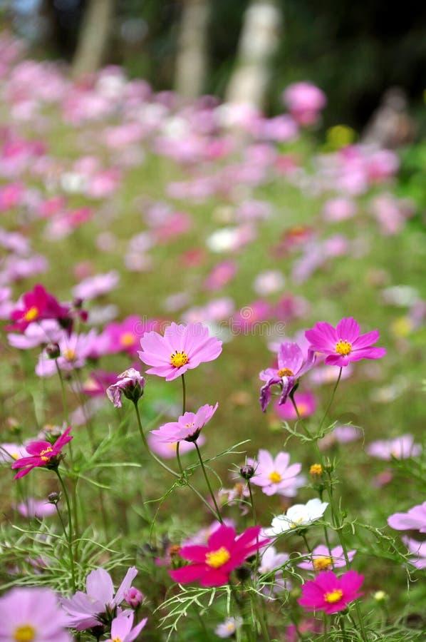 Couleurs de fleur photos stock