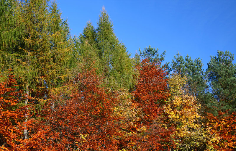 Couleurs de l'automne images libres de droits