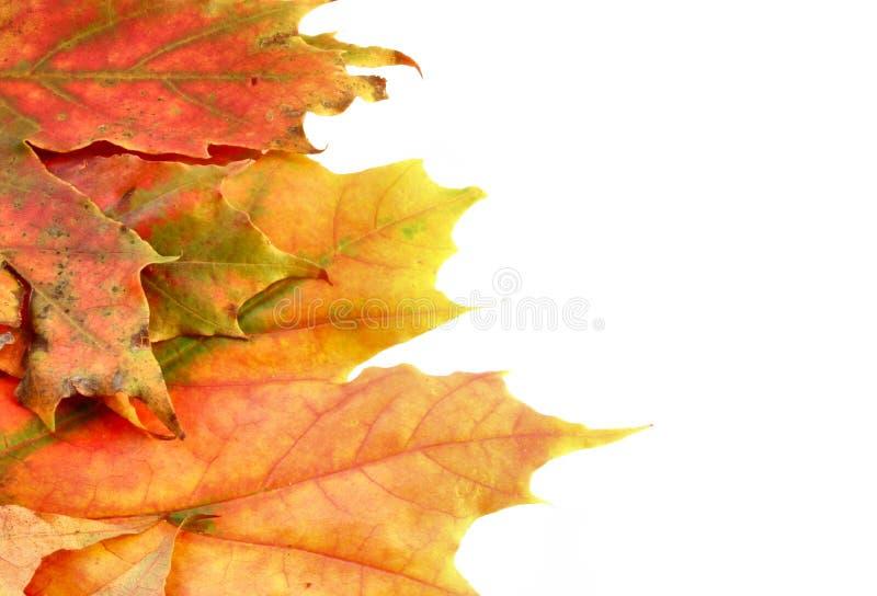 Couleurs de l'automne #7 photo stock