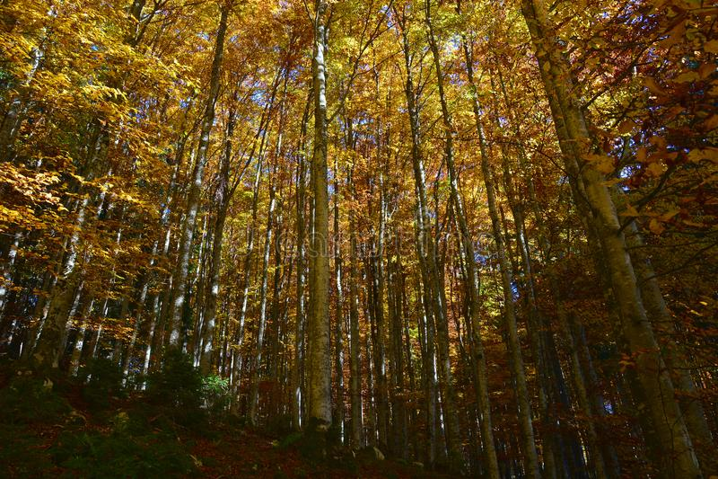 couleurs de la géométrie et d'automne photographie stock libre de droits