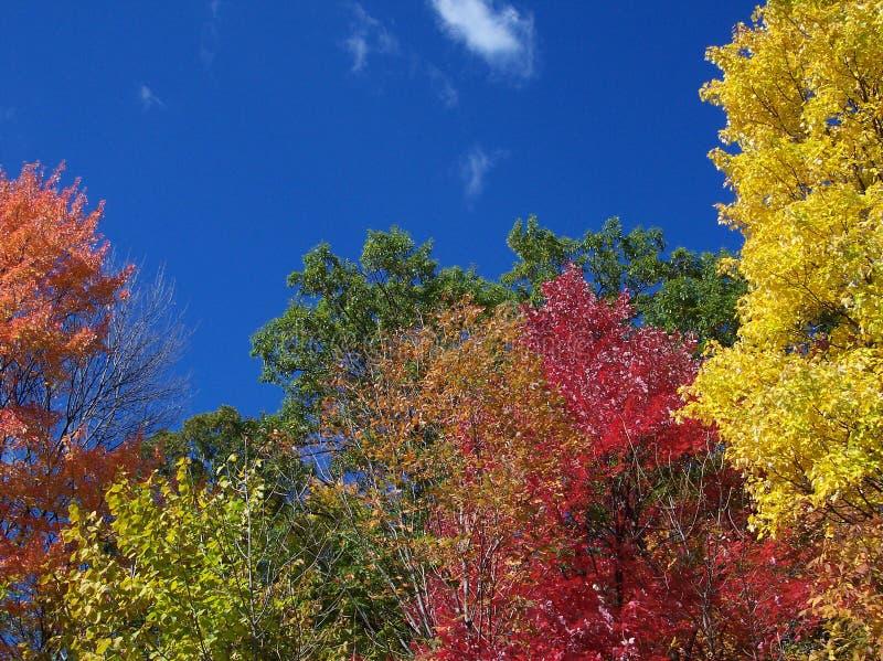Couleurs de la saison d'automne photos libres de droits