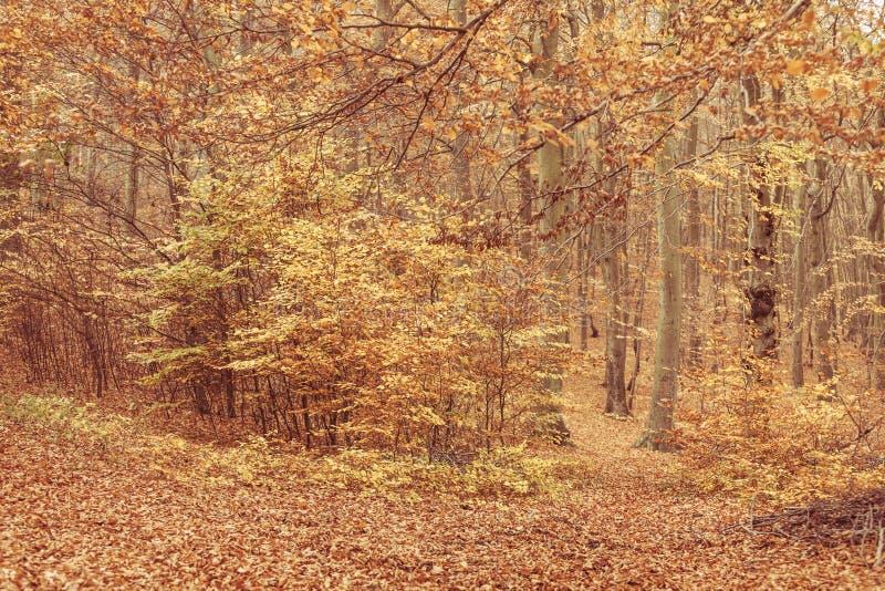 Couleurs de nature en automne images stock