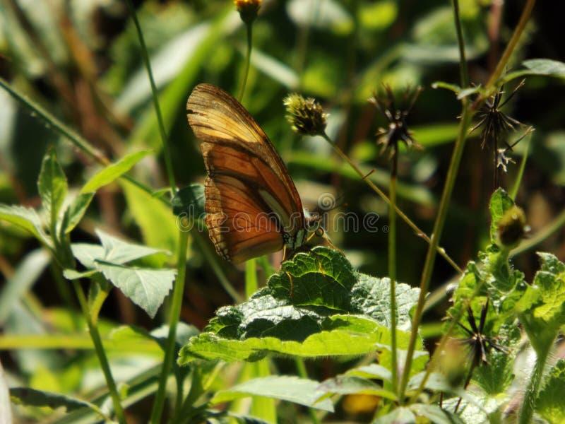Couleurs de nature de rose de fleur de papillon image libre de droits