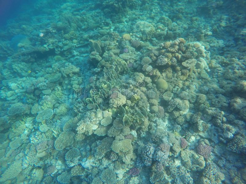 Couleurs de récifs coraliens photographie stock libre de droits