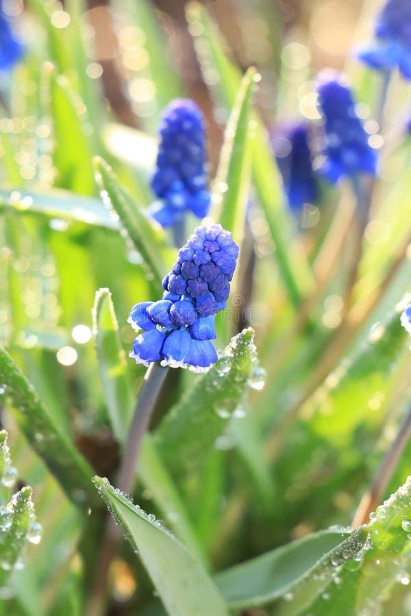 Couleurs de ressort avec le bokeh et baisses, fleurs tôt abstraites sur le fond de bokeh au lever de soleil, photos stock