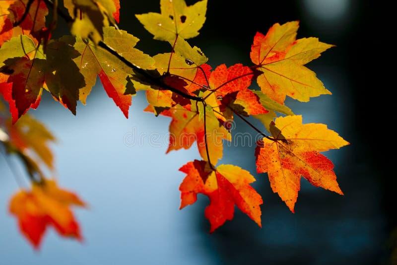 Couleurs de saison d'automne photographie stock libre de droits
