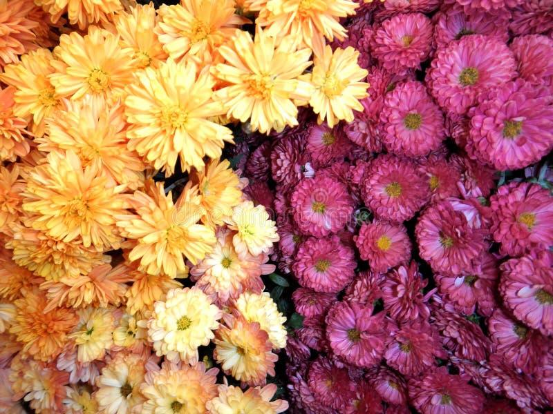 Couleurs des fleurs images stock