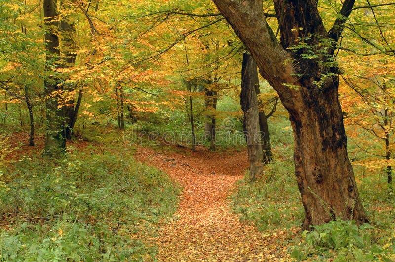 Couleurs et chemin d'automne image libre de droits