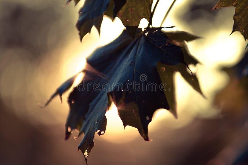 Couleurs et lames d'automne images stock