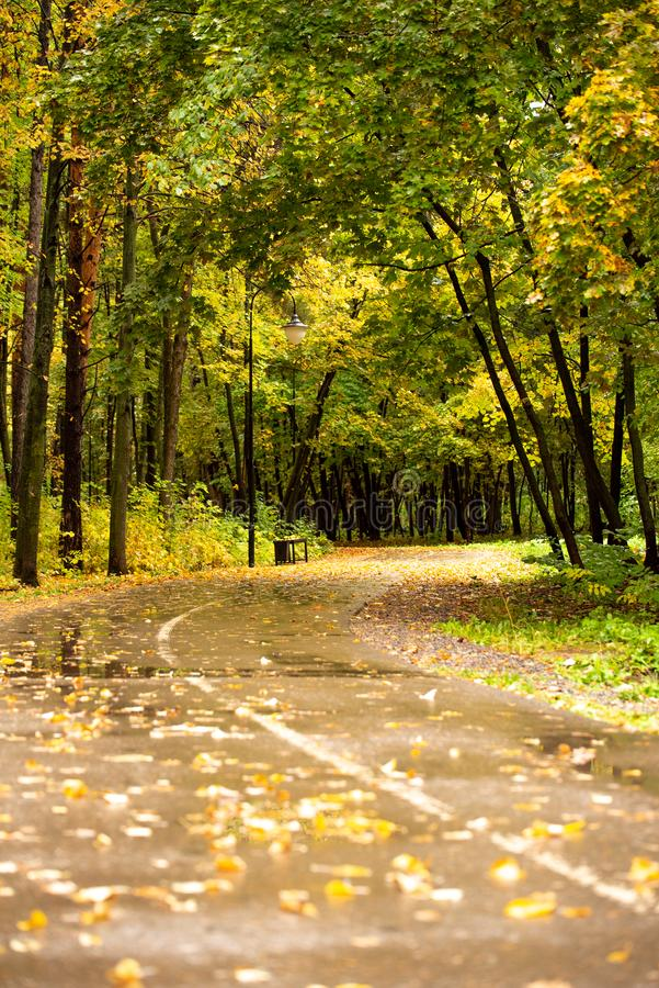 Couleurs jaunes de feuillage d'automne sur la route photos stock