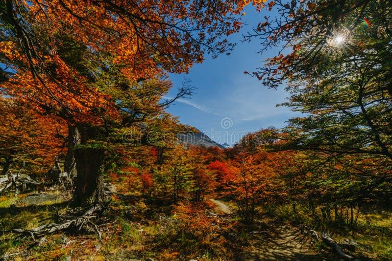 Couleurs lumineuses d'automne et paysages de la visibilité directe Glaciares de parc Chute dans le Patagonia, le côté argentin photos libres de droits