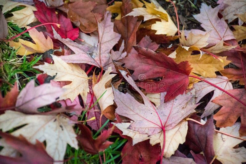 Couleurs lumineuses et belles d'automne gentil et beau images libres de droits
