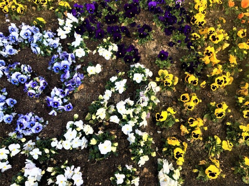Couleurs, ressort et fleurs photos libres de droits
